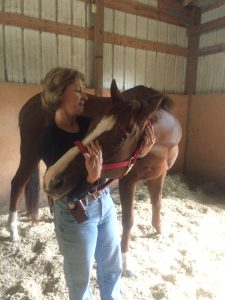 Coralie-equine-massage4