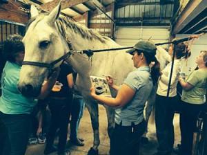 DMR-horse-painters