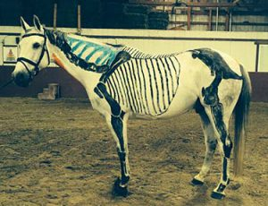 DMR-painted-horse