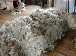 Web-NZ-sheep-shearing